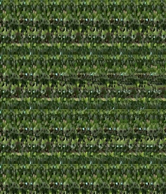 "At Home (Wallpaper Border: Aloe vera A), autostereogram, 2014, 10""x8.5"""