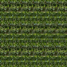 "At Home (Wallpaper Border: Aloe vera B), autostereogram, 2014, 10""x8.5"""