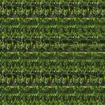 "At Home (Wallpaper Border: Aloe vera C), autostereogram, 2014, 10""x8.5"""