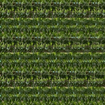 "At Home (Wallpaper Border: Crassula ovata), autostereogram, 2014, 10""x8.5"""
