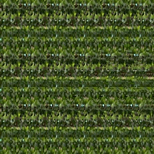 "At Home (Wallpaper Border: Pilea peperomioides A), autostereogram, 2014, 10""x8.5"""