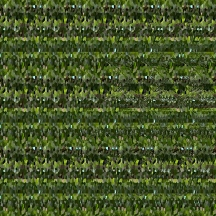"At Home (Wallpaper Border: Pilea peperomioides B), autostereogram, 2014, 10""x8.5"""