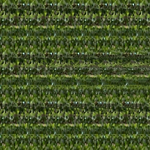 "At Home (Wallpaper Border: Schlumbergera x buckleyi B), autostereogram, 2014, 10""x8.5"""