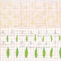 "Sapota Study #2, pencil, gouache and coloured pencil on rag paper, 2017, 11""x15"""