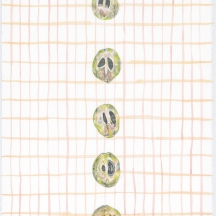 "Sapota Study #3, pencil, gouache and coloured pencil on rag paper, 2017, 11""x15"""